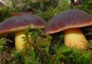 Удивительные свойства грибов