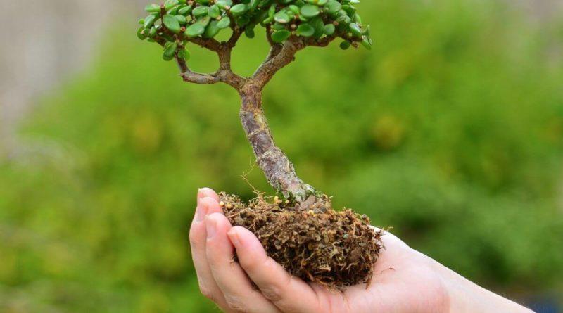 Растения думают