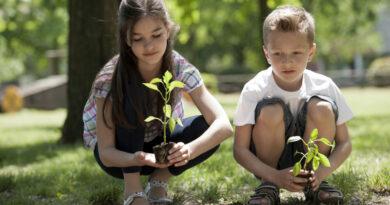 буллинг и растения