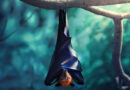 Могли ли летучие мыши стать разносчиками коронавируса