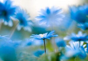 голубой цвет в жизни