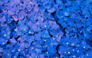 синий цвет в жизни