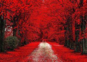красный цвет в жизни