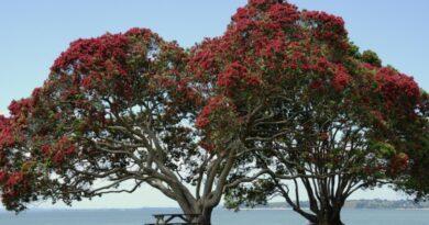 Так ли просты деревья, как нам кажется