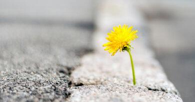 Откуда происходит благословенная настойчивость