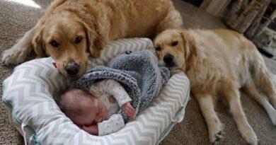 Жизнь с домашними животными